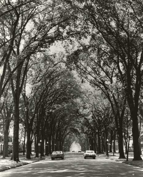 Depew Avenue Elms